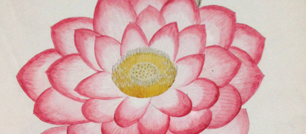 Detail of a drawing from the William Roxburg Collection at the Botanical Survey of India, Kolkata